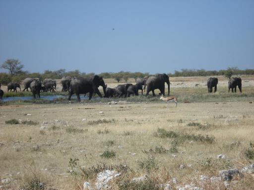 Een bad vol olifanten foto jacqueline en jan lourens in afrika - Foto in een bad ...
