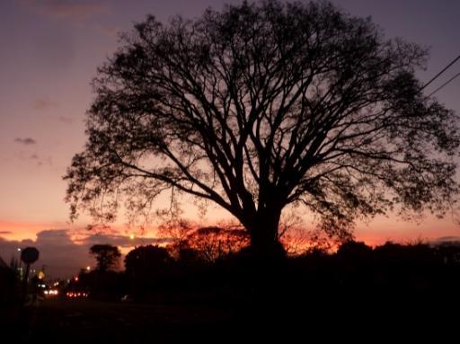 Guanacaste boom de nationale boom van costa rica