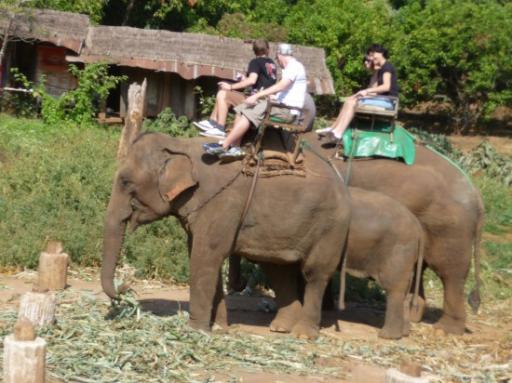 Elephant List Free Porn Links  Free Porn Pics XXX Sex Videos