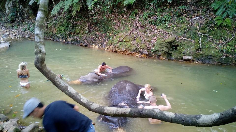 Olifanten in bad 1 foto jan is heel ver weg van huis - Foto in een bad ...