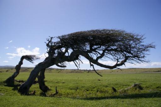 Hoe de wind waait door de bomen foto around the world for Door 7 days to die