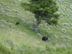 """""""Ik zag 2 beren....."""" Eindelijk!!!!!"""
